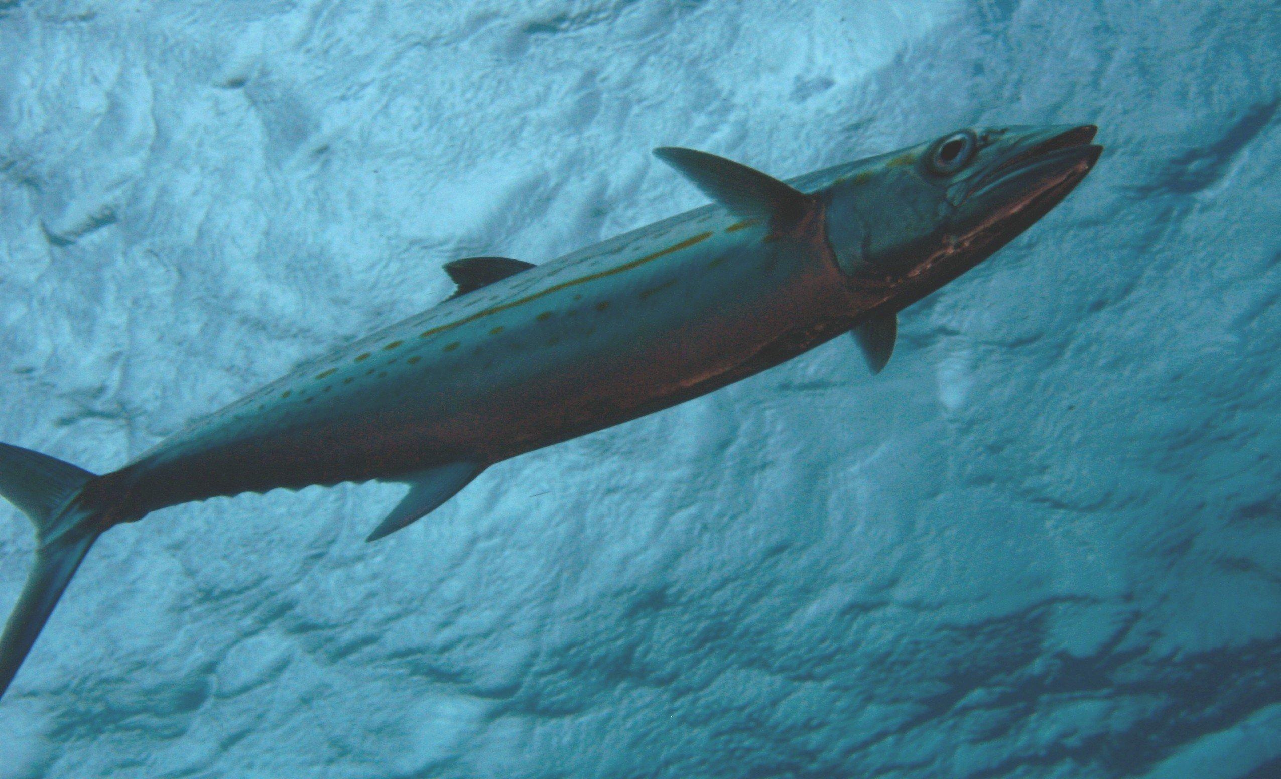 Kinétravel » La plongée sous-marine au rocher du Diamant